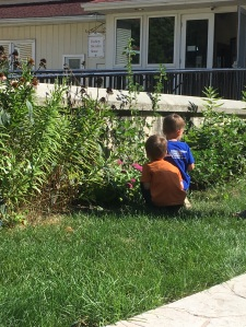 Children observing butterflies in the garden.